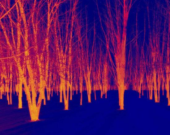 红外光波段看到的图像